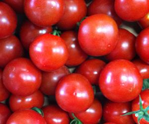 トマト 中玉 フルティカ
